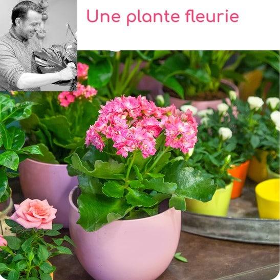 Livraison de Fleurs gerzat, Clermont-Ferrand, 7j/7.